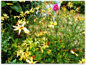 A scattering of wild flowers