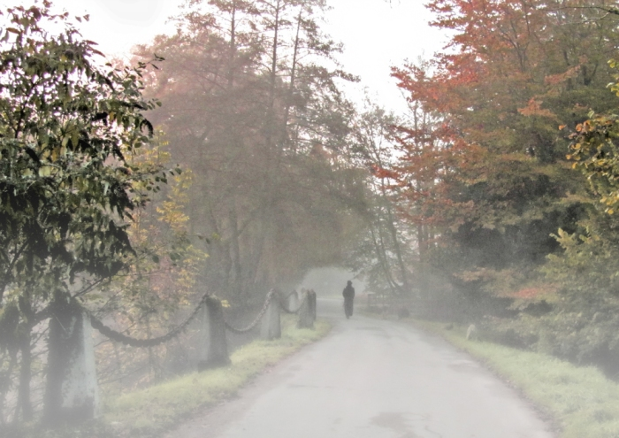 the path in the fog