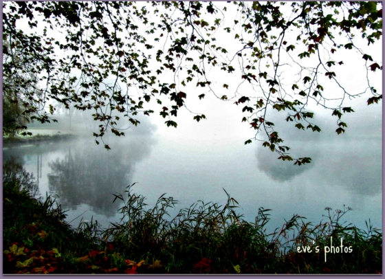 fog and leaves