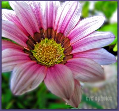 apinkflower999