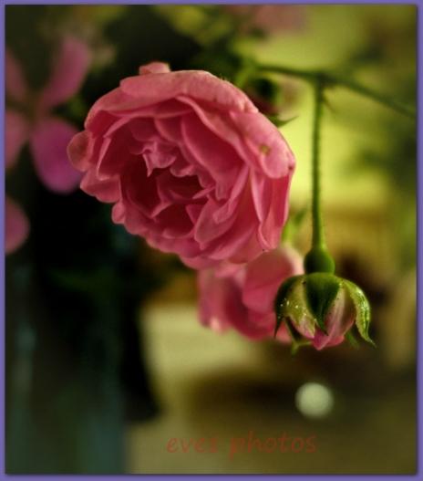 tiny wild rose