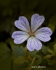FlowerTests-207