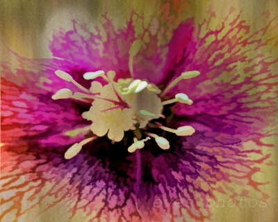 Hellebore - abstract