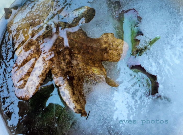 Leaves frozen in a bowl of water