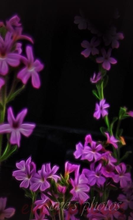 tiny purple flowers with glow effect